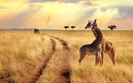 safari afrique